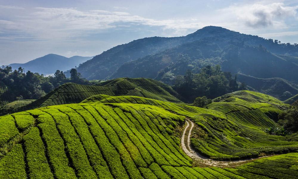 منطقه کامرون هایلند در مالزی