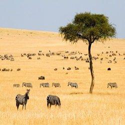 تور کنیا